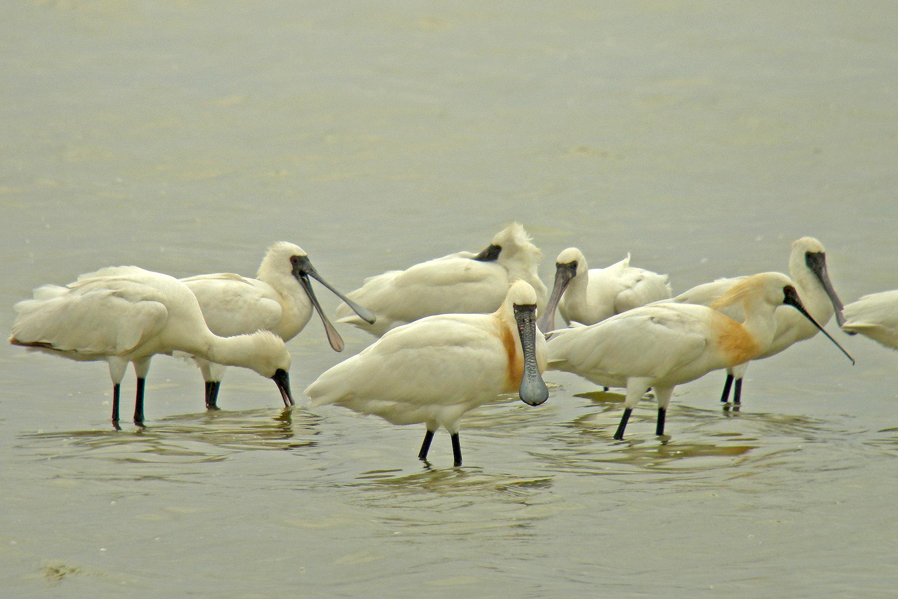 Taiwan Birding Tours - Taiwan Birdwatching Tours - Birdquest
