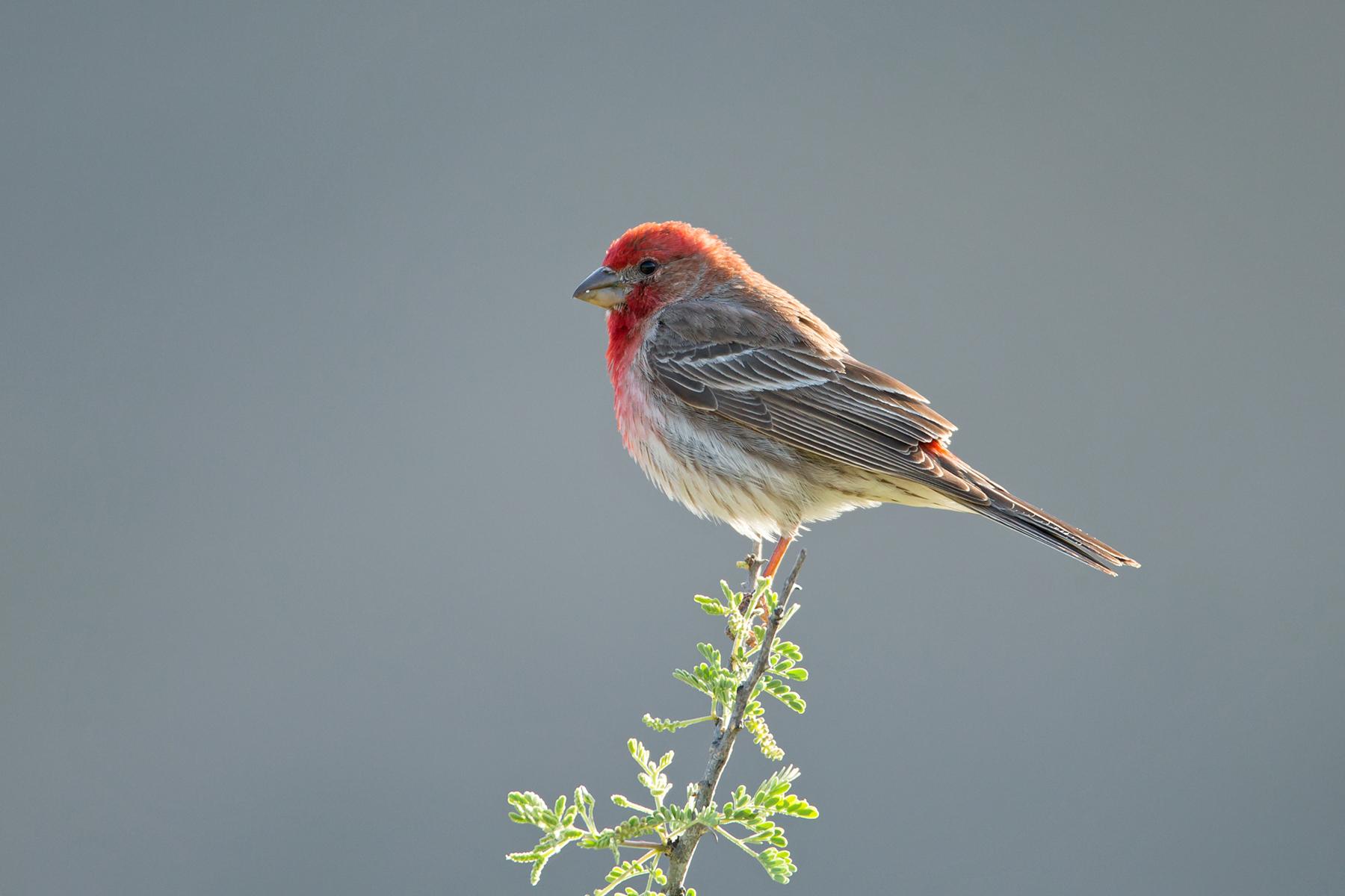 Texas Birding Tours - Texas Birdwatching Tours - Birdquest