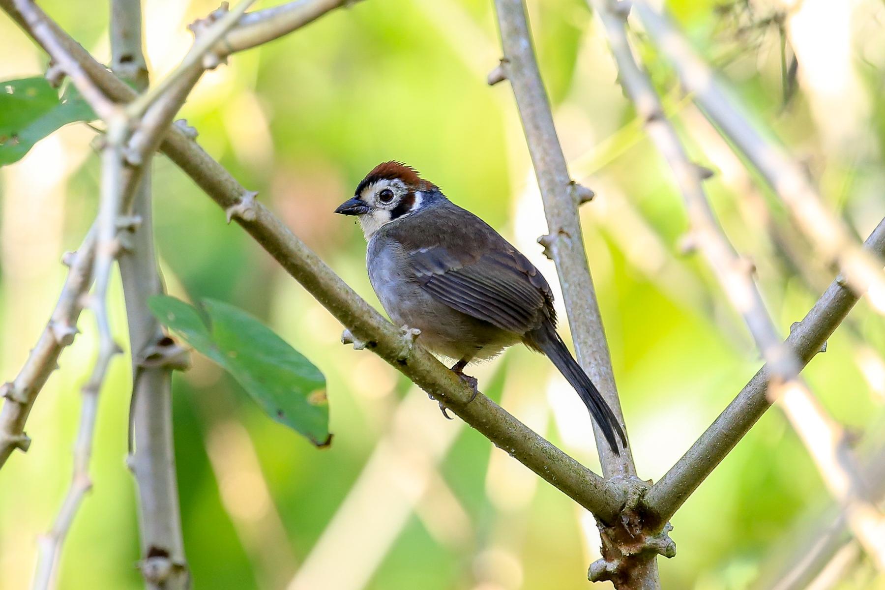Honduras Birding Tours - Birdwatching - Birds of Honduras