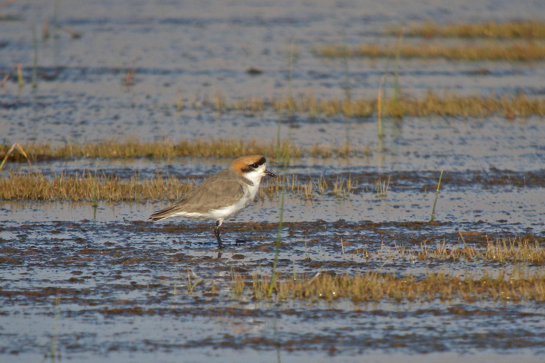 Ani James Red Light Central bolivia birding tours - bolivia birdwatching tours - birdquest